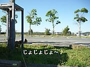 P1190334