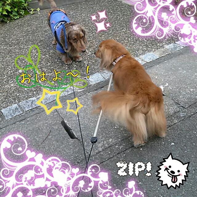 Zip_20130426125715615